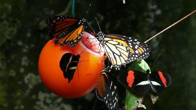 butterfly-77597_640